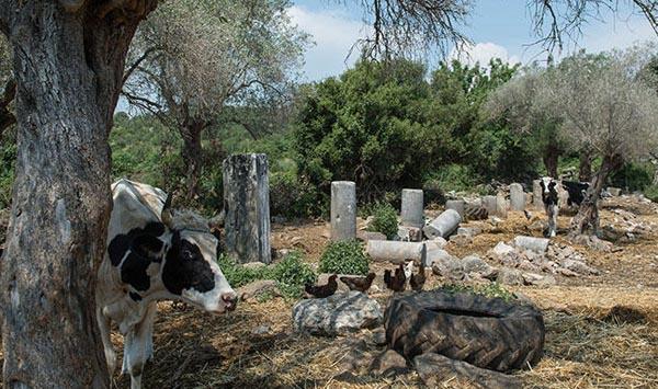 বিক্রি হচ্ছে আড়াই হাজার বছরের পুরনো শহর