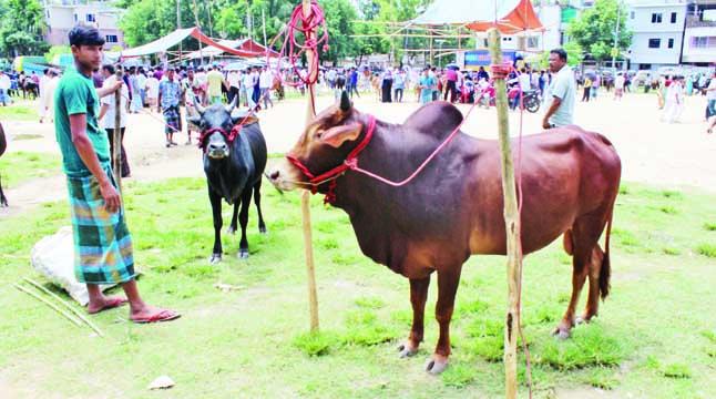 বান্দরবানে সরগরম পশুরহাট