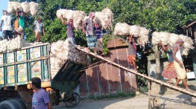 উল্লাপাড়ায় খোলা হয়নি পাট ক্রয় কেন্দ্র