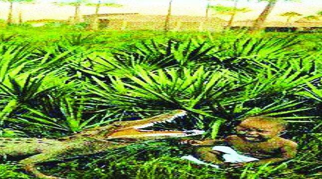 কুমির শিকারের টোপ কৃষ্ণাঙ্গ শিশু