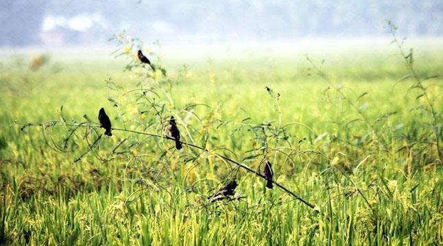 ধূসর বিবর্ণে এলো শীতের বাহন হেমন্ত