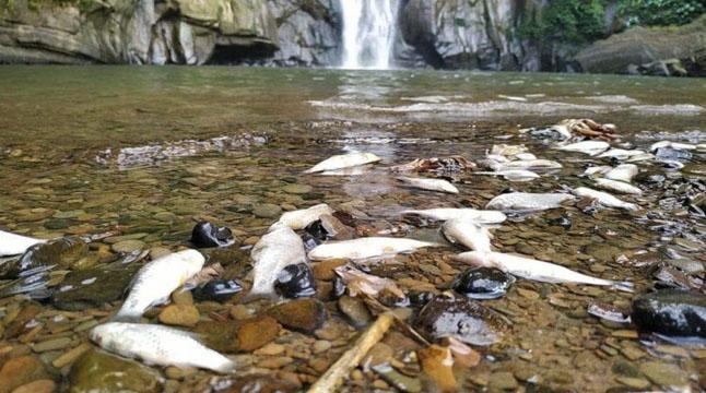 মাধবকুণ্ড জলপ্রপাতে ভাসছে মরা মাছ