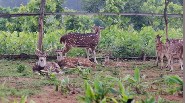 ডুলাহাজারা বঙ্গবন্ধু সাফারি পার্কে শতাধিক প্রাণীর বংশ বিস্তার