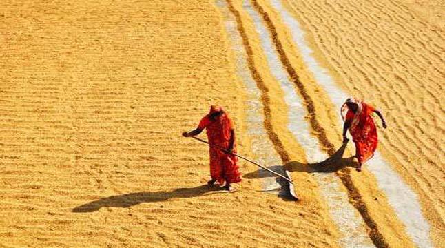 রংপুরে মজুরিবৈষম্যের শিকার নারী শ্রমিক