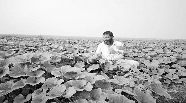 হাকালুকি হাওর তীরে সবজি চাষ