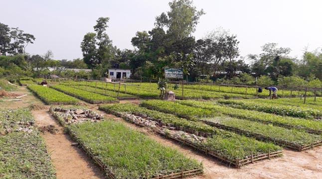 গাজীপুরে বন বিভাগের দৃষ্টিনন্দন নার্সারি