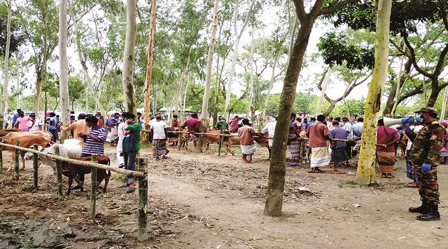 নীলফামারীতে সেনা তত্ত্বাবধানে স্বাস্থ্যবিধি মেনে পশুর হাট