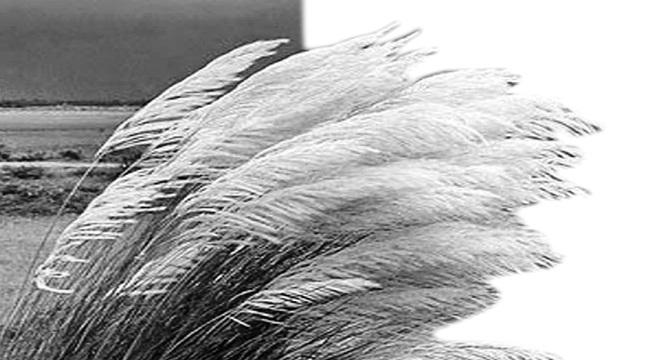 নীল আকাশে সাদা মেঘের ভেলা