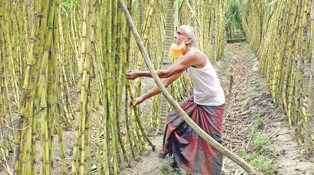 কুমিল্লায় বাণিজ্য ও কৃষিতে নবোদ্যম