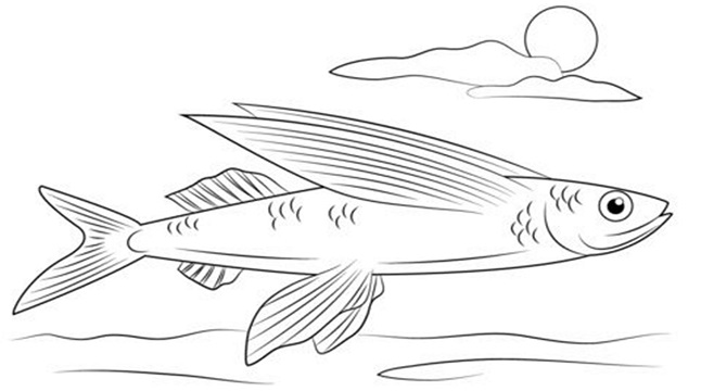 মাছ চায় পাখির মতো উড়তে